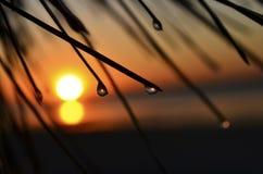 En droppe av dagg är i strålarna av solnedgången Arkivbilder