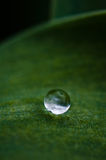 En droppe av dagg på en leaf Fotografering för Bildbyråer