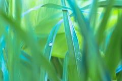 En droppe av dagg på en stam för grönt gräs royaltyfri foto