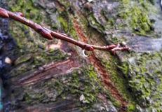 en droppe av dagg som hänger från en filial arkivfoto
