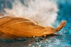 En droppe av vatten eller dagg på en guld- fjäder, en akvamarinbakgrund Härlig konstnärlig bild, abstrakt makro Selektivt fokuser royaltyfri fotografi