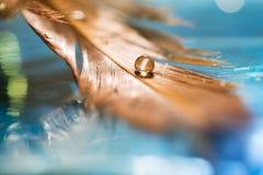 En droppe i fjädern för fågel` s Guld- fjäder på en blå bakgrund Konstarbete arkivfoto