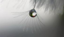 En droppe på blomman Royaltyfria Bilder