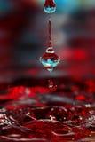 En droppe på blomman Royaltyfri Foto