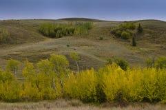 En dunge av ljusa gula höstträd Arkivbilder