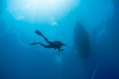 En dykare heads in mot yttersidan efter en dyk royaltyfri bild
