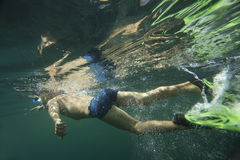 En dykare, i att snorkla för flipper Royaltyfri Bild