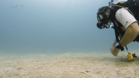 En dykare når golvet för det vita havet arkivfilmer