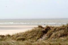 en dyn är en kulle av lös sand som byggs av eoliska processar och, kallas den Ammophila arenariaen, europeiska marramgras, europe Arkivfoto