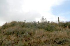 en dyn är en kulle av lös sand som byggs av eoliska processar och, kallas den Ammophila arenariaen, europeiska marramgras, europe Royaltyfri Fotografi