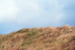 en dyn är en kulle av lös sand som byggs av eoliska processar och, kallas den Ammophila arenariaen, europeiska marramgras, europe Fotografering för Bildbyråer
