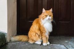 En dyster röd katt sitter vid dörren och ser in i kameran arkivfoton