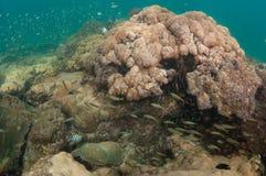 En eau peu profonde d'une plage de la Floride Photographie stock libre de droits