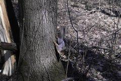 En ekorre i en skog royaltyfria bilder