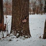 En ekorre i en snö parkerar royaltyfri bild