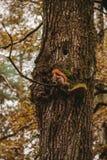 En ekorre på trädet royaltyfri foto