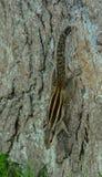 En ekorre på trädet royaltyfri fotografi