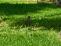 En ekorre som äter i parkera Arkivbild