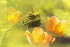 En el agua Fotos de archivo