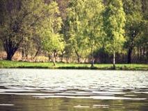 En el agua Imagen de archivo libre de regalías