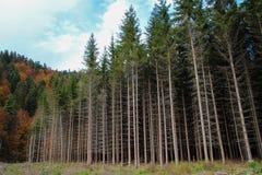 En el borde del bosque Imagen de archivo libre de regalías