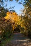 En el bosque Imagen de archivo libre de regalías