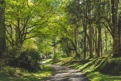 En el bosque Fotos de archivo