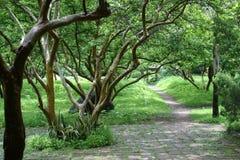 En el bosque Imagenes de archivo