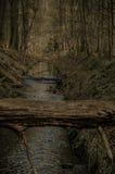 En el bosque Imagen de archivo
