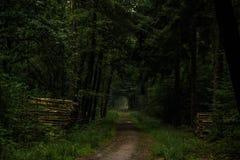 En el bosque Fotografía de archivo