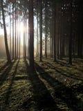 En el bosque Foto de archivo libre de regalías