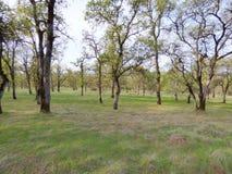 En el bosque abierto Imagenes de archivo