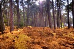 En el bosque de Darss Fotos de archivo libres de regalías