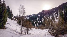 En el bosque de la montaña Imagen de archivo libre de regalías