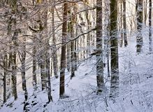 En el bosque de la nieve Imagen de archivo