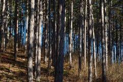 En el bosque de Viena imagen de archivo