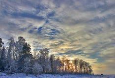 En el bosque del abedul de la nieve Fotografía de archivo