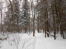 En el bosque del invierno Imagenes de archivo