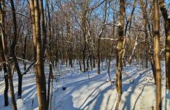 En el bosque del invierno Fotografía de archivo libre de regalías