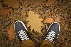 En el bosque del otoño Fotografía de archivo