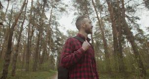 En el bosque del pino almacen de metraje de vídeo