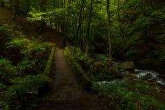 En el bosque oscuro Fotos de archivo libres de regalías