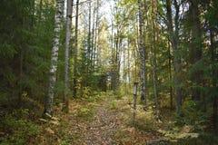 En el bosque en otoño y el aprendizaje algo nuevo foto de archivo libre de regalías