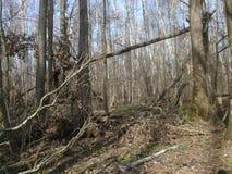En el bosque viejo en primavera, abril, día soleado Fotografía de archivo