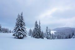 En el césped cubierto con nieve que los árboles agradables se están colocando vertió con los copos de nieve Imágenes de archivo libres de regalías