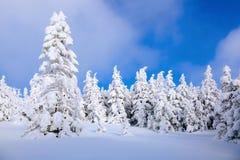 En el césped cubierto con nieve que los árboles agradables se están colocando vertió con los copos de nieve en día de invierno es Foto de archivo