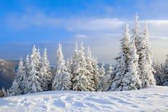En el césped cubierto con nieve que los árboles agradables se están colocando vertió con los copos de nieve en día de invierno es Fotos de archivo libres de regalías