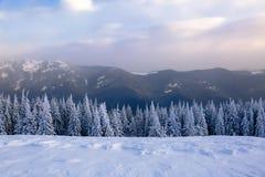 En el césped cubierto con nieve que los árboles agradables se están colocando vertió con los copos de nieve en día de invierno es Fotografía de archivo libre de regalías