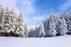 En el césped cubierto con nieve que los árboles agradables se están colocando vertió con los copos de nieve en día de invierno es Imagen de archivo libre de regalías