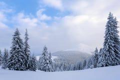 En el césped cubierto con nieve que los árboles agradables se están colocando vertió con los copos de nieve en día de invierno es Fotografía de archivo